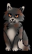 Таволга ПТ (котёнок)