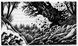 Дерево падает Долгое эхо