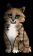 Травница котёнок
