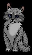 Уголёк (котёнок)