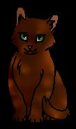 Сорока (котёнок)