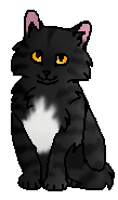 Галечник(котенок)