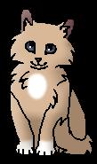 Тихогрудка (котёнок)