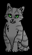 Росяночка ПВ (котёнок)