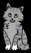 Когтишка ПТ (котёнок)