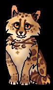 Оцелоточка (котёнок)