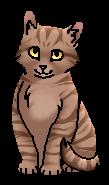 Совушка (котёнок)