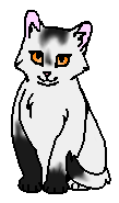 Светлокрылая (котёнок)