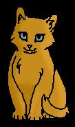 Семечка (котёнок)