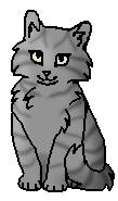 Луночка (котёнок)