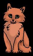 Золинка (котёнок)