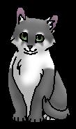 Горличка (котенок)