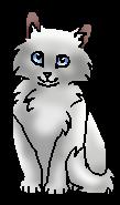 Небозвёзд Котёнок