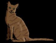 Косолап (звёздный предок)