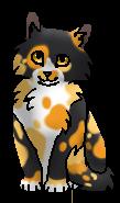 Цветинка ПТ (котёнок)