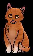Гром(котёнок)