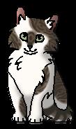 Колючка РП (котёнок)