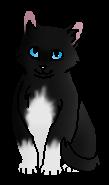 Белогрудый (котёнок)