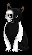 Иголочка НП (котёнок)