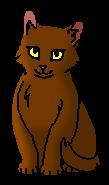 Рыжинка ПВ (котёнок)
