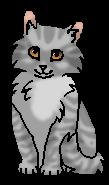 Вербочка (котёнок) м