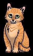 Горчичка (котёнок)