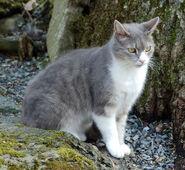 Серо-белый котик в лесу