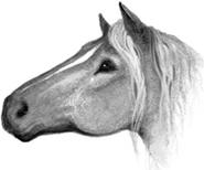 Лошадь Секреты племён англ