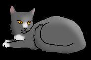 Бегущая Вода (кошка древнего клана)