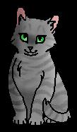 Хвощинка (котёнок)