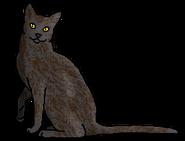Ястребок (звёздный предок)