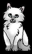 Зак (котенок)