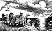 Грачик Ласточка Ураган Белочка Ежевика Рыжинка и Полночь Восход луны