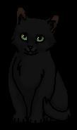 Ночная Звезда (котёнок)