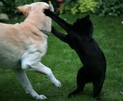Кот и пес драка