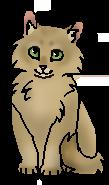 Лепесточек (котёнок)