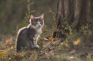 Серо-белый котёнок сидит под деревом