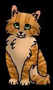Рябиночка (котёнок)