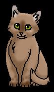 Светлячок ПТ (котёнок)