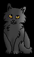 Сланница котенок