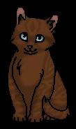 Колючка (котёнок)