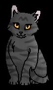 Коготочка котёнок