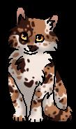Медуница (котёнок)