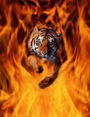 Тигр и пламя