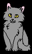 Мышастик (котёнок)