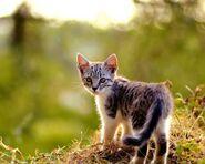 Серо-белый котёнок в лесу