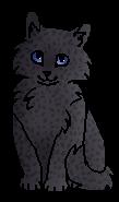 Щуколап (котёнок)