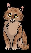 Пачкун - котенок