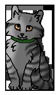 Френки котенок