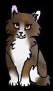 Черепашка котёнок